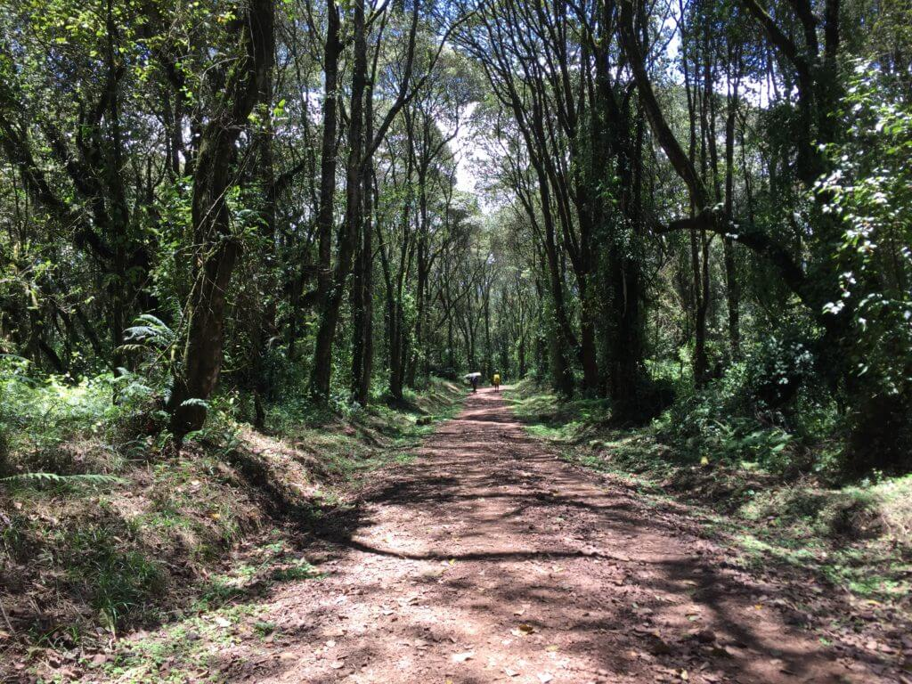 The very well trodden trail of Machame Route