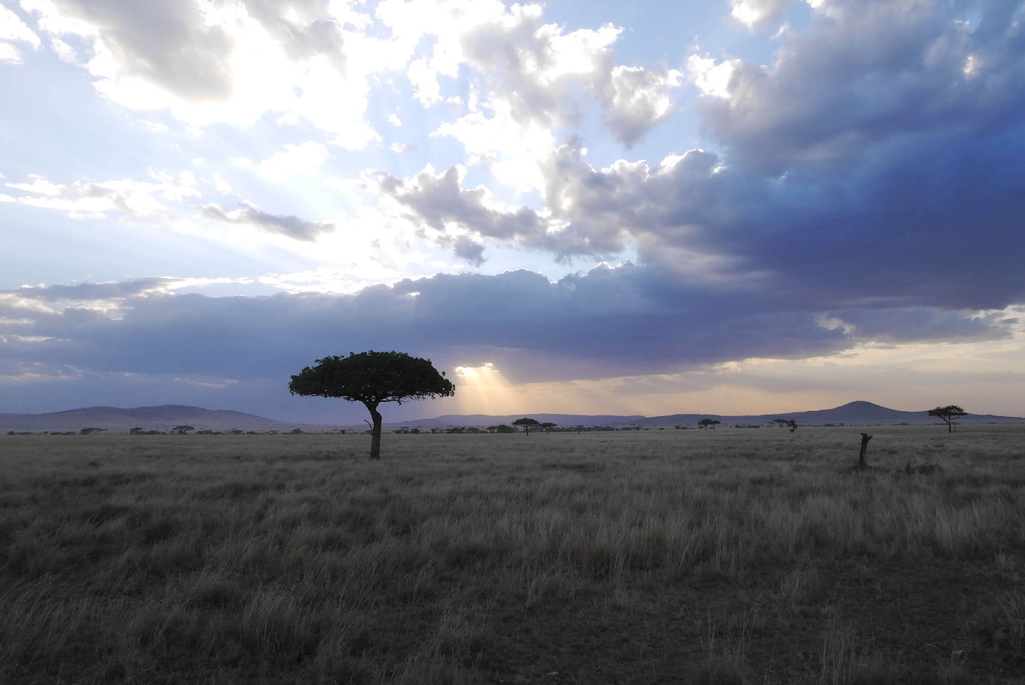 Serengeti sunset, serengeti safari