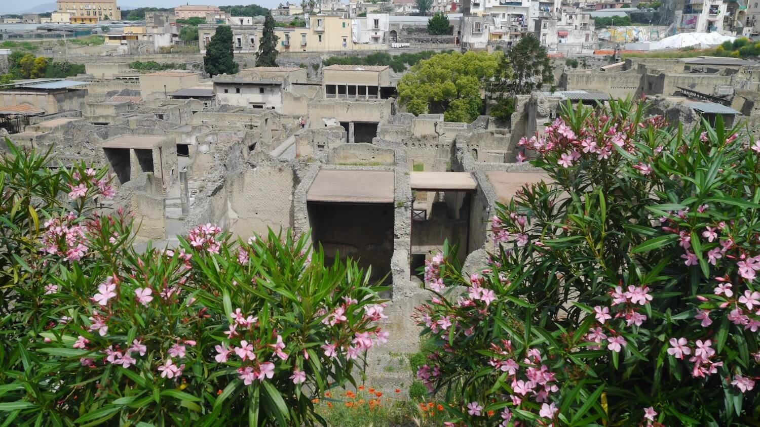Herculaneum in bloom